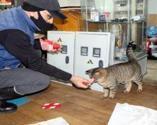 Kediler üşümesin diye dükkanını açtı