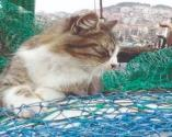 Zonguldak'ta kayboldu, Tekirdağ'da bulundu