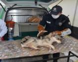 Yaralı köpeğe 'HAYDİ' yetişti