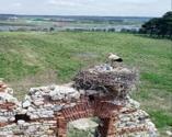 Tarihi yapılar leyleklere yuva oldu