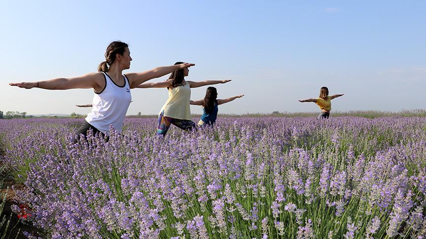 Edirne'de lavanta tarlasında yoga yaptılar