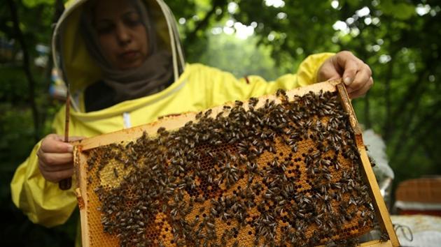 Hayallerine arı ve bal üretimiyle kavuştu