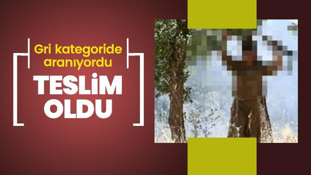 Siirt'te gri kategoride aranan terörist teslim oldu