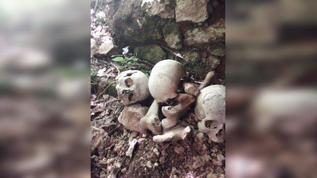 Küre Dağları Milli Parkı'nda definecilerin kaçak kazısında insan kemikleri bulundu