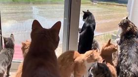 Hepsi cam kenarına çıkıp onu izledi! Meraklı kedilere büyük ilgi