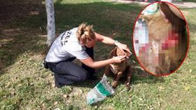 Mersin'de sokak köpeğini bıçaklayarak ölüme terk ettiler