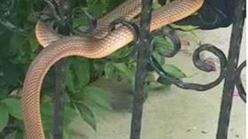Kırklareli'nin apartman girişine dolanan 1 buçuk metrelik yılan böyle kurtarıldı