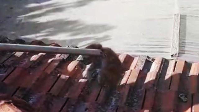 Baca deliğine düşen yavru kediyi itfaiye kurtardı