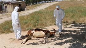 Adıyaman'da Akdere köyü 'kuduz' nedeniyle karantinaya alındı
