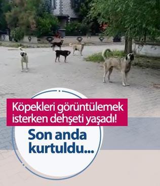 Bursa'da bir şahıs köpekleri görüntülemek isterken saldırıya uğradı