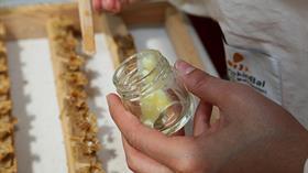 Ordu arı sütü üretiminde iddialı: Kilosu 5 ile 10 bin lira arasında değişiyor