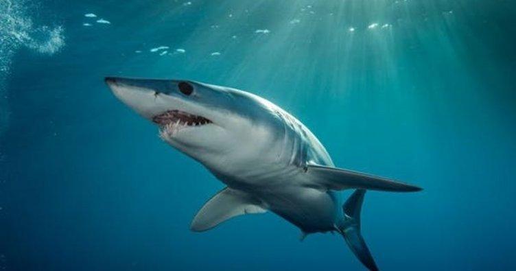 Hawaii'de köpek balığı saldırısı