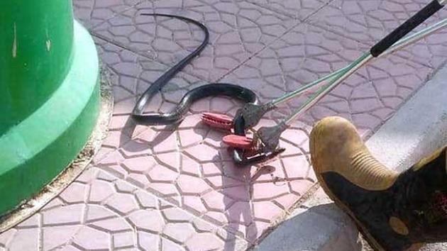 Hastanede yılan paniği