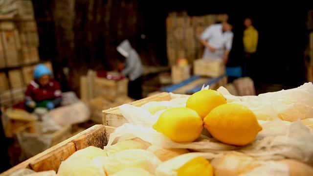 Limonlar nemli depoda çürüyünce fiyatlar artışa geçti