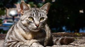 Ukrayna sokak kedileri için sayım yapılacağını duyurdu