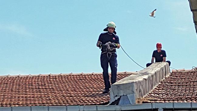 İBB itfaiyesi çatıya sıkışan martıyı önce kurtardı daha sonra annesine kavuşturdu!