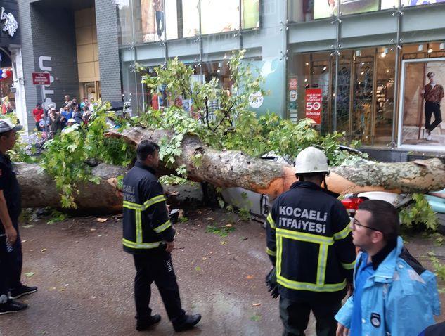Yıldırım düşen ağaç otomobilin üstüne devrildi