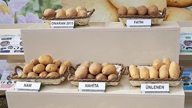 """Yerli patates cinsi """"Nahita"""" görücüye çıktı"""