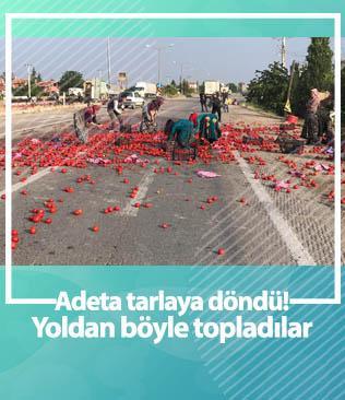 Yol domates tarlasına döndü; çevre sakinleri toplayıp evlerine götürdü