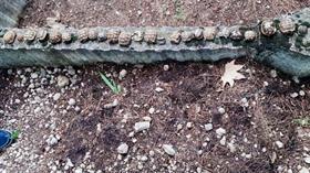 Isparta'da mezarlıkta yan yana dizilmiş 23 kaplumbağa ölüsü bulundu