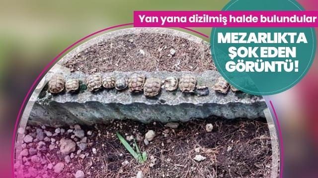 Şok eden görüntü! Mezarlıkta yan yana dizilmiş halde bulundular