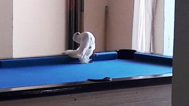Bodrum'da tüfekle vurulan güvercin otele sığındı