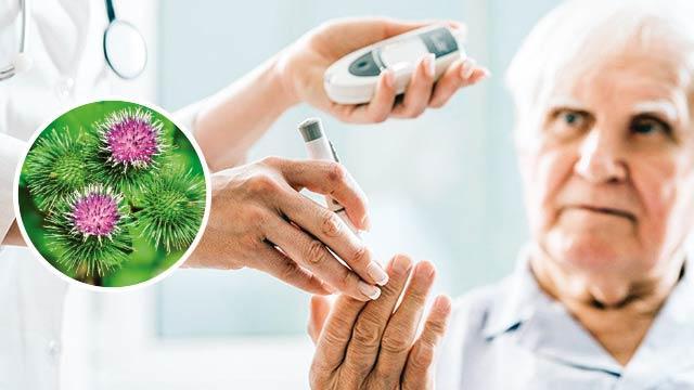 Doğal insülin pıtrak