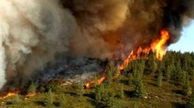 Antalya'nın Alanya ilçesinde orman yangını
