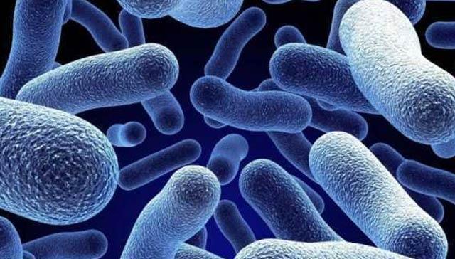 İngiltere'de bakteri 12 kişinin ölümüne yol açtı