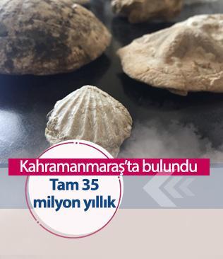 Kahramanmaraş'ta 35 milyon yıllık fosiller bulundu