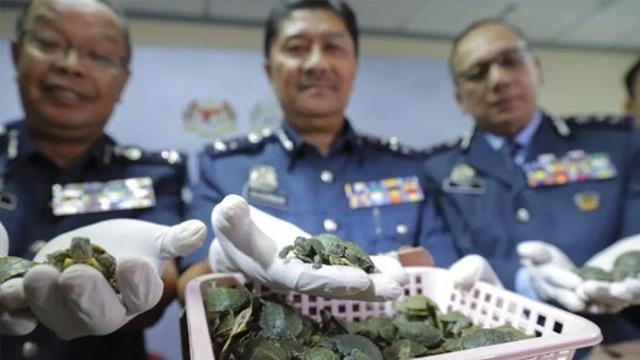 Malezya'da 5 binden fazla kaplumbağa havalimanında ele geçirildi
