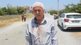 Manavgat'ta sokak köpeklerinin saldırdığı yaşlı adam hastanelik oldu