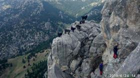 Kayalıkta mahsur kalan keçiler, 6 saatte kurtarıldı