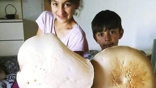 Kars'ta 3 kilogramlık dev çayır mantarı bulundu