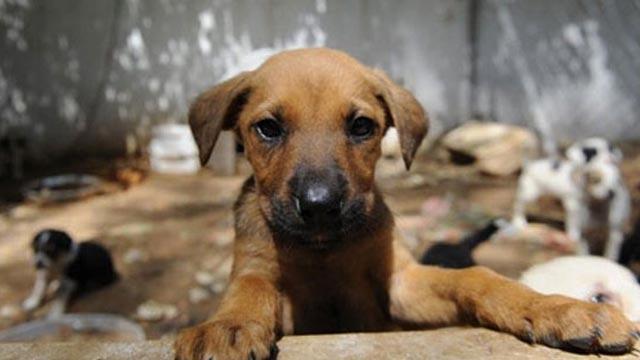 Köpeğe eziyete bin 763 lira para cezası