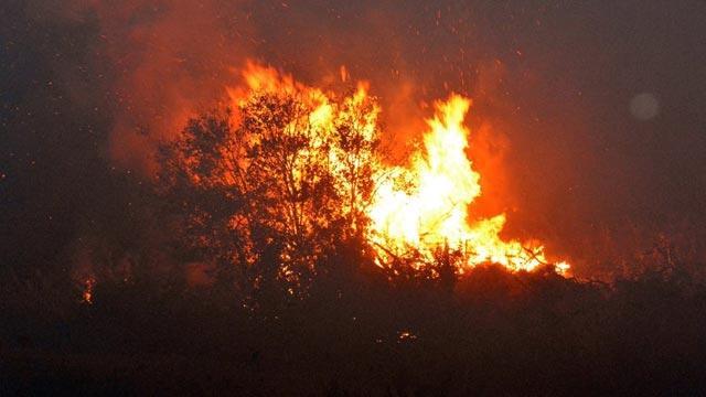Aydın Nazilli'de makilik alanda yangın çıktı