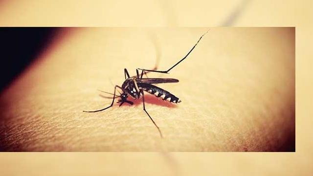 İBB: Avcılar'daki 'Batı Nil Virüsü' ile mücadele çalışmaları arttırıldı