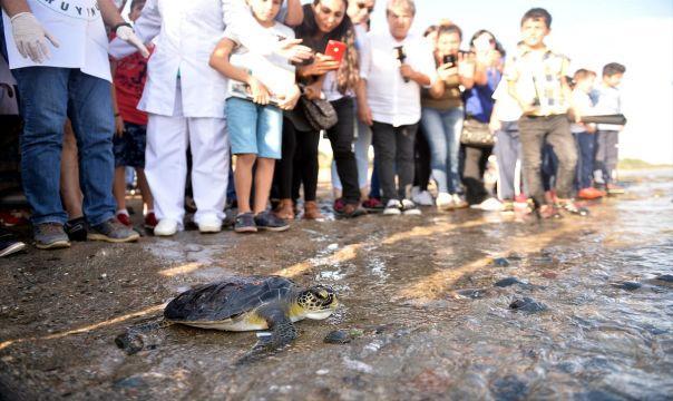 Yumurta bırakmak isteyen kaplumbağanın görüntülerinin çekilmesi tepkilere neden oldu