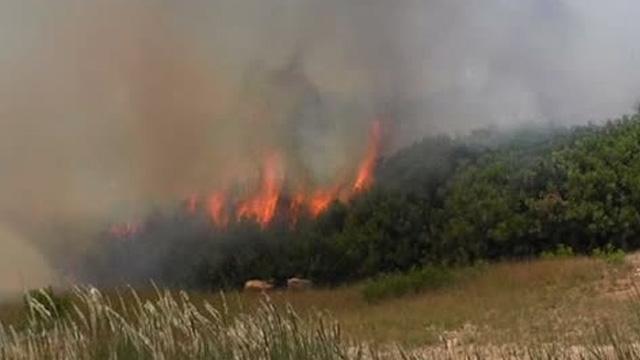 İzmir Ödemiş'te makilik alanda yangın