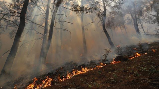İzmir'de dün başlayan orman yangını rüzgarın etkisiyle iki mahalleye yaklaştı