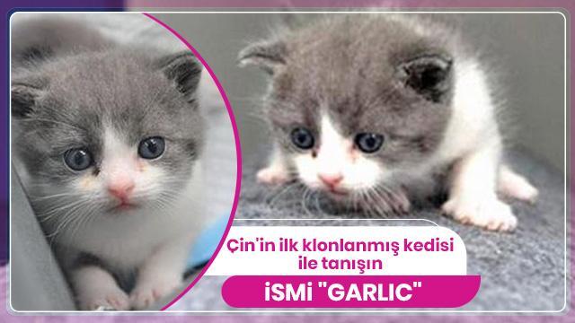 O Çin'in ilk klonlanmış kedisi...