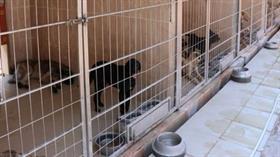"""Antalya'da barınaktaki """"hayvanların öldürüldüğü"""" iddiası"""