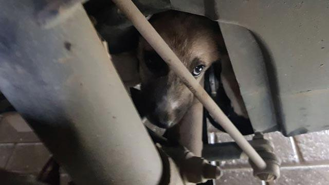 Araç motoruna sıkışan yavru köpek 1,5 saatlik çalışmayla kurtarıldı
