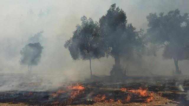Muğla'daki orman yangını havadan ve karadan müdahaleyle söndürüldü