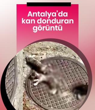 Antalya'da vahşet! 3 kedi parçalanmış halde bulundu