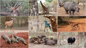 Senegal'in vahşi yaşam parkı 'Bandia Rezervi'