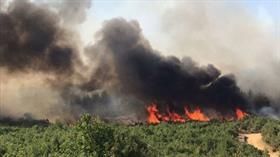 Edirne Keşan'da orman yangınına müdahale ediliyor