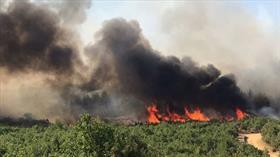 Keşan'da orman yangınına müdahale ediliyor