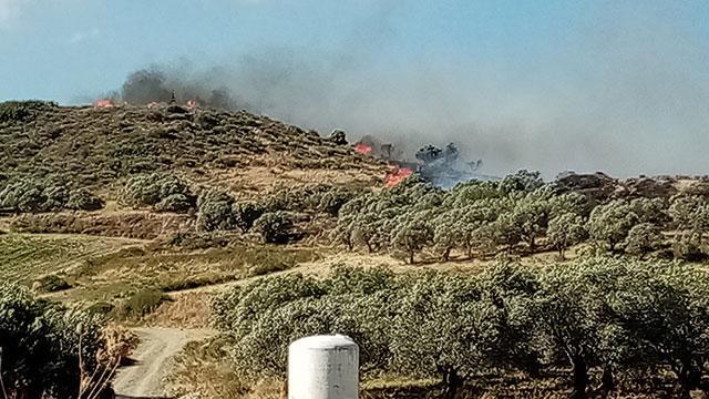 Antakya'da zeytinlikte çıkan yangında 3 hektar alanda zarar oluştu