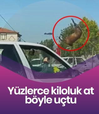 Yer: Eskişehir... Yüzlerce kiloluk at böyle uçtu!